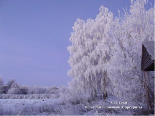 С. Сурки Фото Жильниковой Маргариты