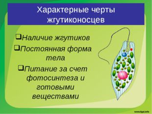 Характерные черты жгутиконосцев Наличие жгутиков Постоянная форма тела Питани