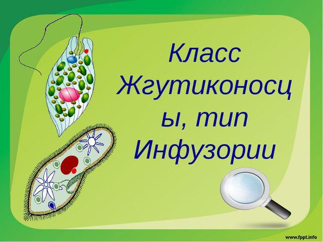 Класс Жгутиконосцы, тип Инфузории