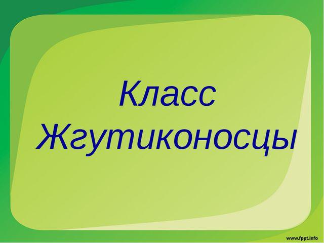 Класс Жгутиконосцы
