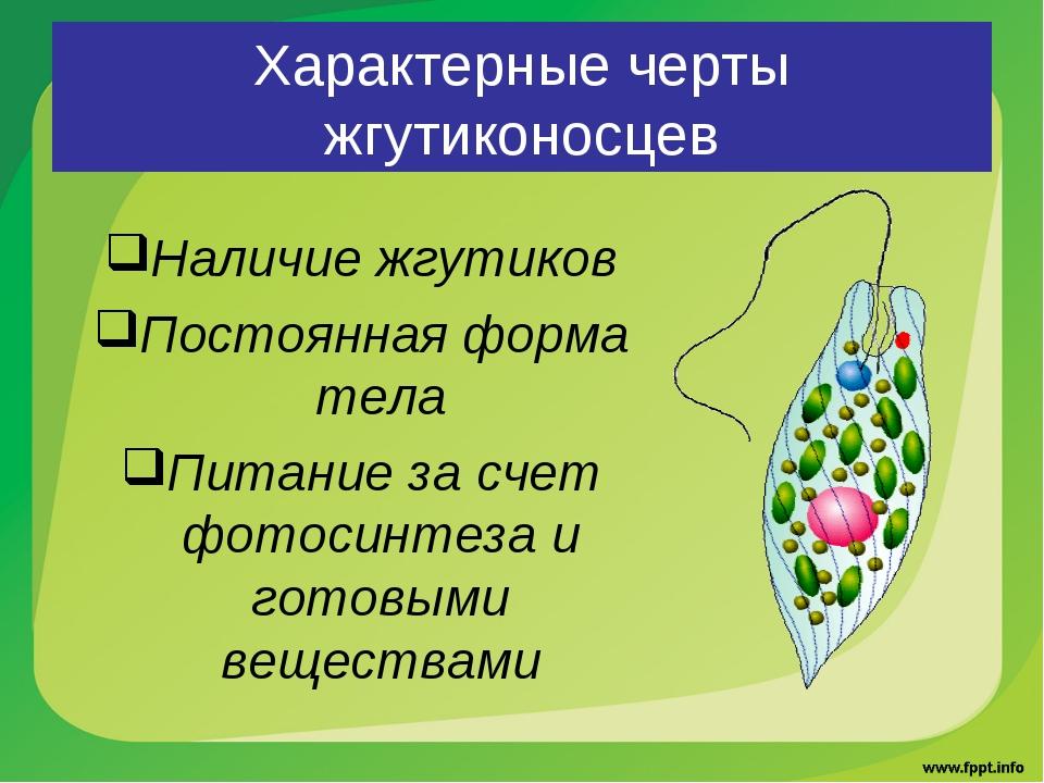 Характерные черты жгутиконосцев Наличие жгутиков Постоянная форма тела Питани...