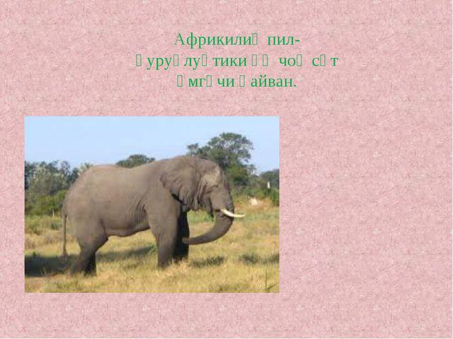 Африкилиқ пил-қуруқлуқтики әң чоң сүт әмгүчи һайван.