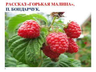 РАССКАЗ «ГОРЬКАЯ МАЛИНА», П. БОНДАРЧУК.