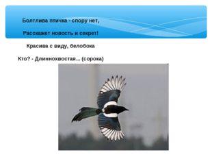 Болтлива птичка - спору нет, Расскажет новость и секрет! Красива с виду, бело