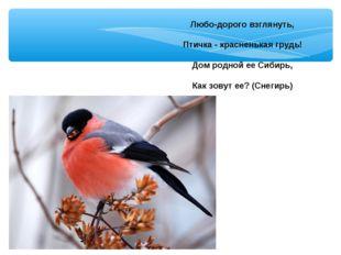 Любо-дорого взглянуть, Птичка - красненькая грудь! Дом родной ее Сибирь, Как