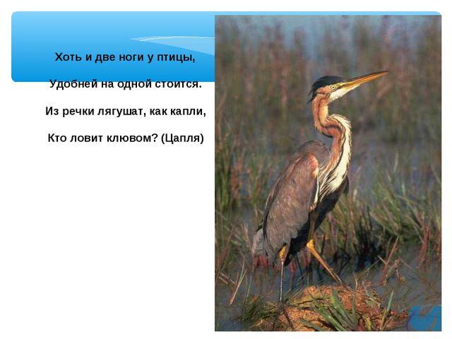 Хоть и две ноги у птицы, Удобней на одной стоится. Из речки лягушат, как капл...