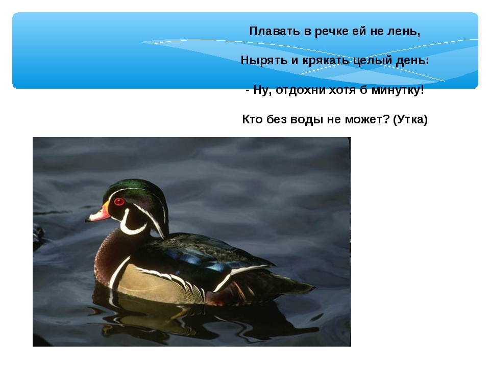 Плавать в речке ей не лень, Нырять и крякать целый день: - Ну, отдохни хотя б...