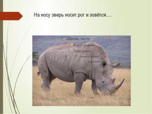 На носу зверь носит рог и зовётся….
