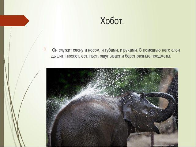 Хобот. Он служит слону и носом, и губами, и руками. С помощью него слон дышит...