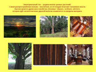 Экваториальный лес – родина многих ценных растений. Самая распространённая па