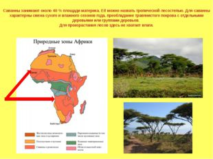 Саванны занимают около 40 % площади материка. Её можно назвать тропической ле
