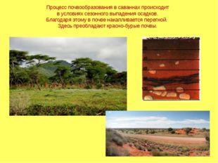 Процесс почвообразования в саваннах происходит в условиях сезонного выпадения