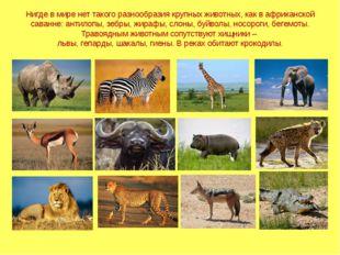 Нигде в мире нет такого разнообразия крупных животных, как в африканской сава
