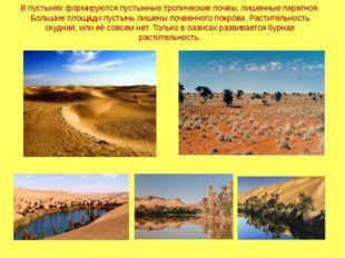 В пустынях формируются пустынные тропические почвы, лишенные перегноя. Больши