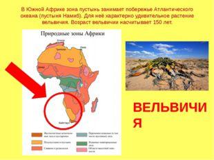 В Южной Африке зона пустынь занимает побережье Атлантического океана (пустыня