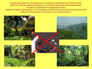 В экваториальном лесу благоприятные условия для жизнедеятельности растений, ж
