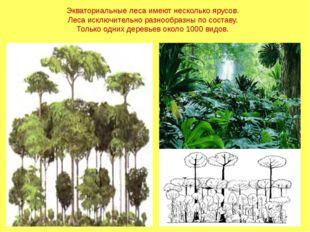 Экваториальные леса имеют несколько ярусов. Леса исключительно разнообразны п