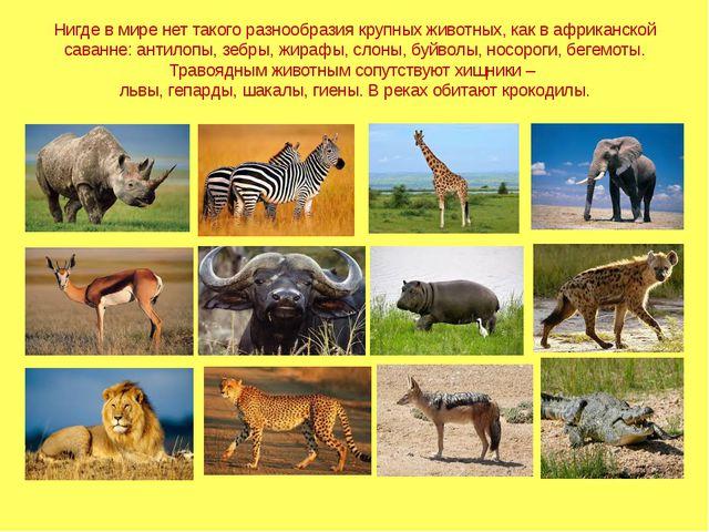 Нигде в мире нет такого разнообразия крупных животных, как в африканской сава...