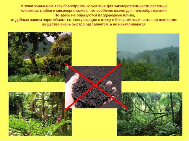 В экваториальном лесу благоприятные условия для жизнедеятельности растений, ж...