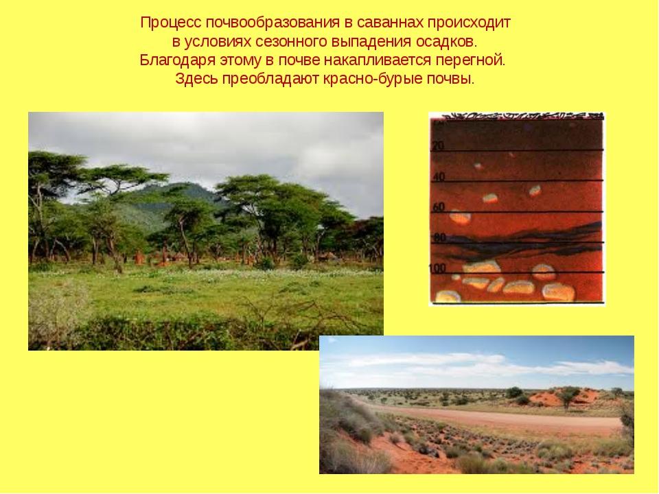 Процесс почвообразования в саваннах происходит в условиях сезонного выпадения...