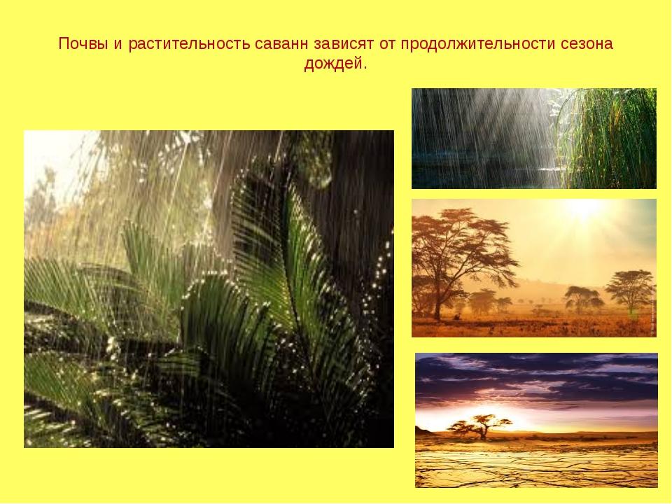 Почвы и растительность саванн зависят от продолжительности сезона дождей.