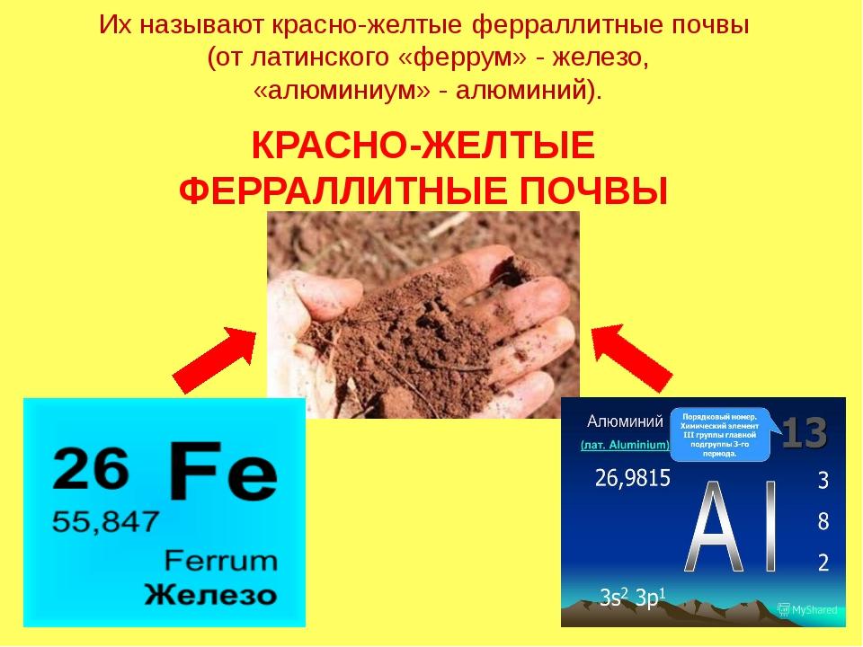 Их называют красно-желтые ферраллитные почвы (от латинского «феррум» - железо...