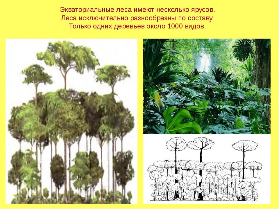Экваториальные леса имеют несколько ярусов. Леса исключительно разнообразны п...