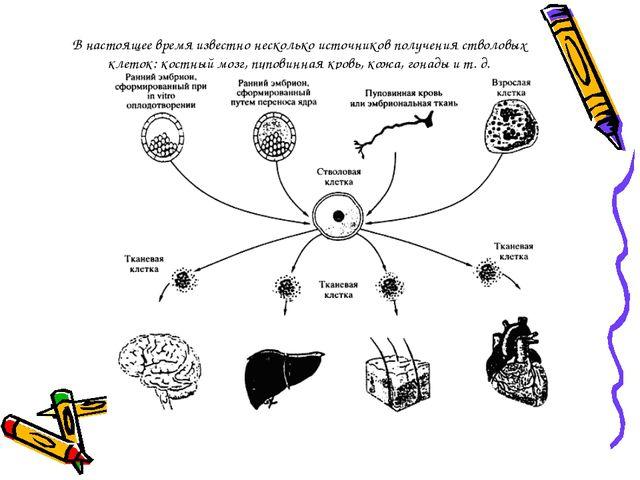 В настоящее время известно несколько источников получения стволовых клеток: к...