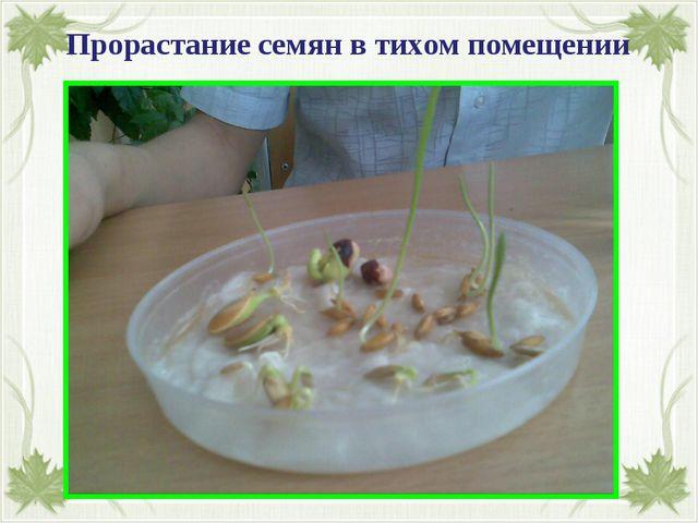 Прорастание семян в тихом помещении