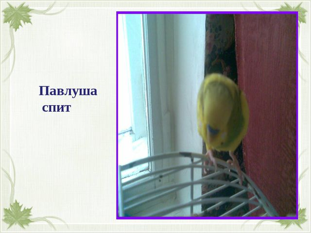 Павлуша спит