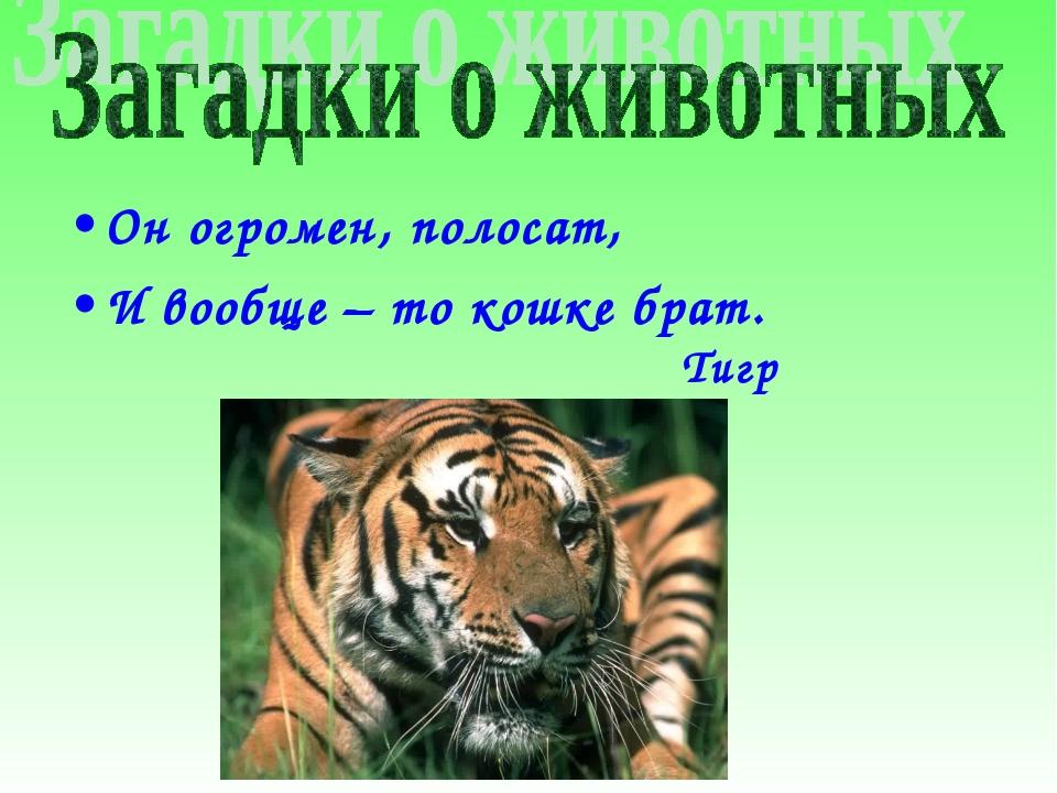 Он огромен, полосат, И вообще – то кошке брат. Тигр