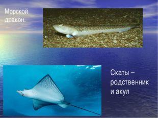 Морской дракон. Скаты – родственники акул
