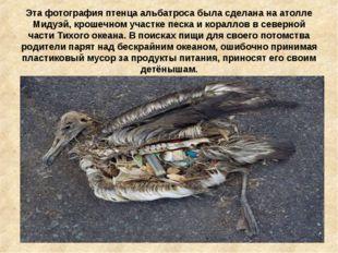Эта фотография птенца альбатроса была сделана на атолле Мидуэй, крошечном уча