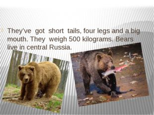 They've got short tails, four legs and a big mouth. They weigh 500 kilograms