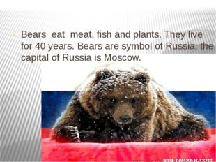 Bears eat meat, fish and plants. They live for 40 years. Bears are symbol of