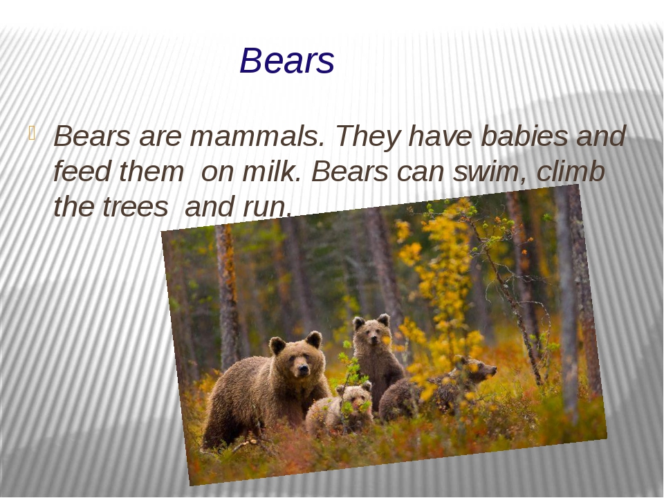 Bears Bears are mammals. They have babies and feed them on milk. Bears can sw...