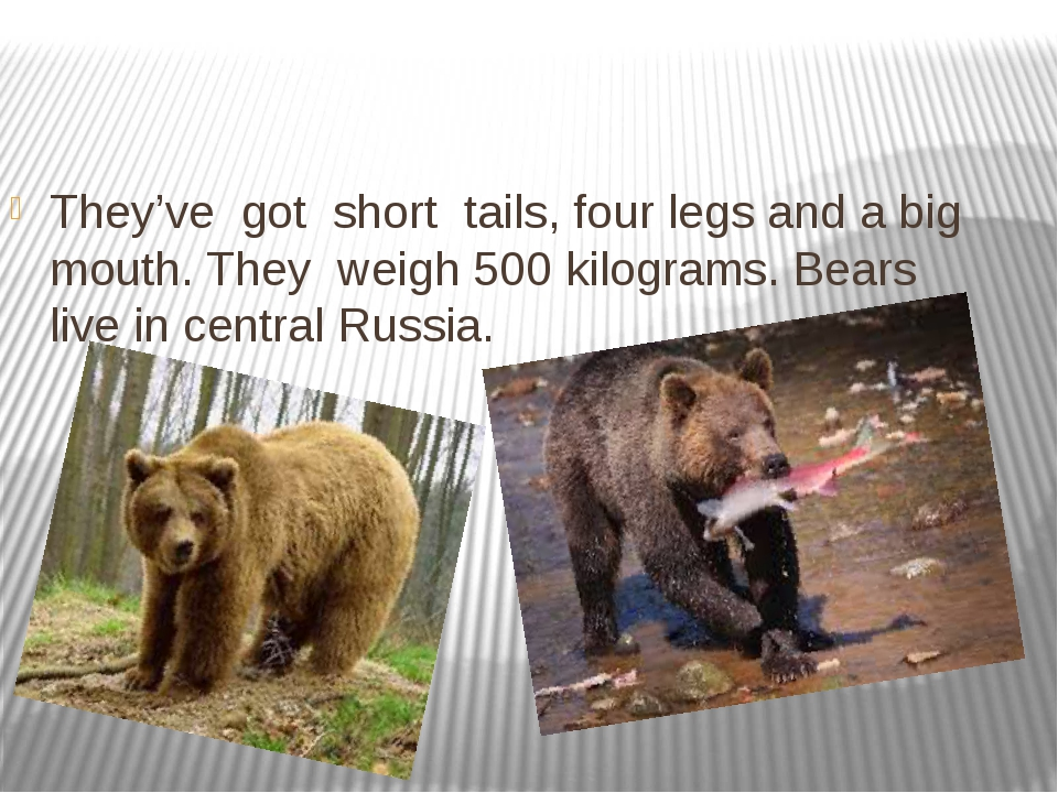 They've got short tails, four legs and a big mouth. They weigh 500 kilograms...