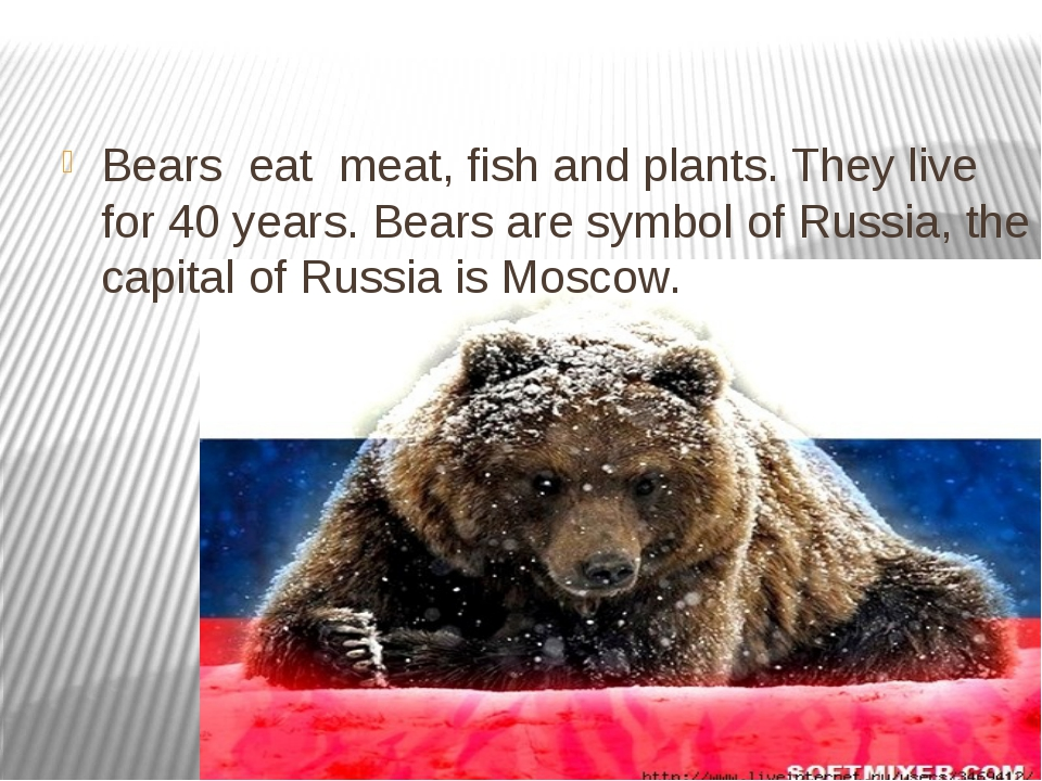 Bears eat meat, fish and plants. They live for 40 years. Bears are symbol of...