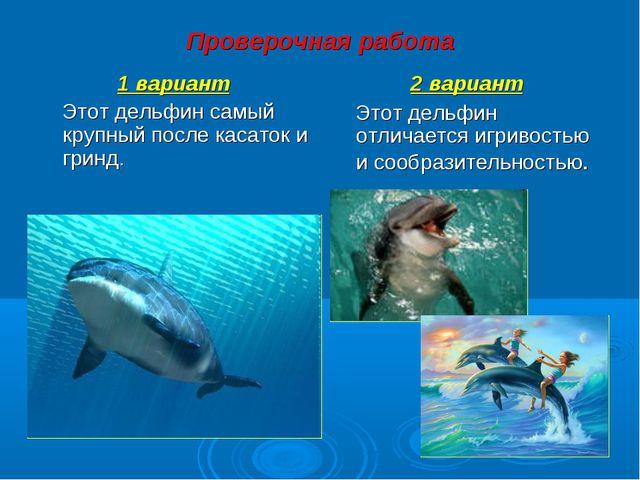 Проверочная работа 1 вариант Этот дельфин самый крупный после касаток и гринд...