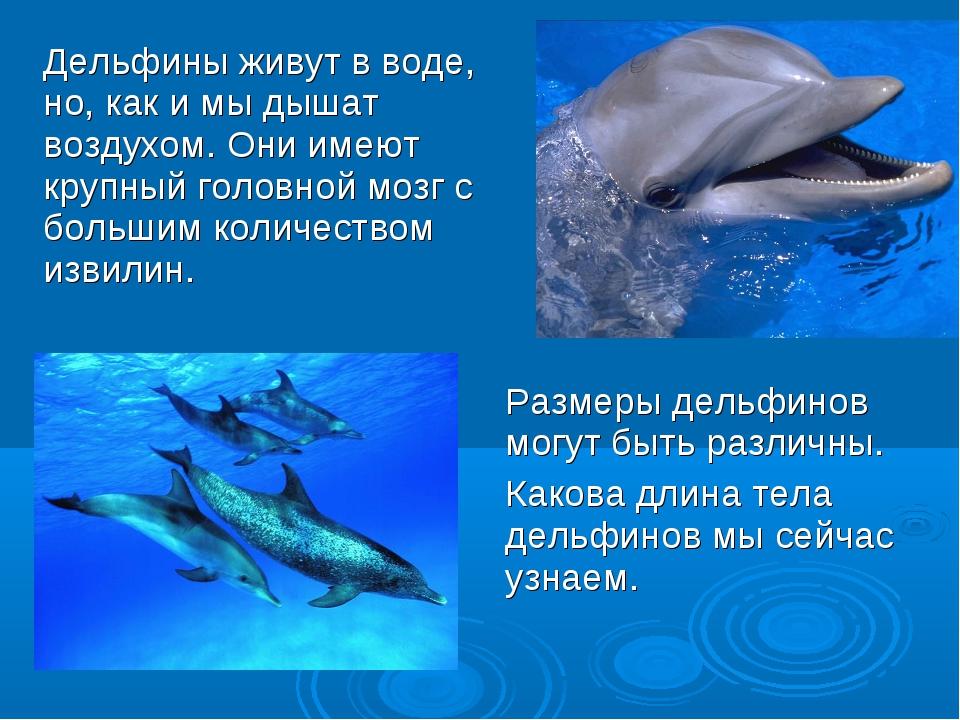 Размеры дельфинов могут быть различны. Какова длина тела дельфинов мы сейчас...