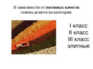 В зависимости от посевных качеств семена делятся на категории: I класс II кла