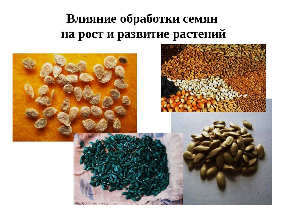 Влияние обработки семян на рост и развитие растений