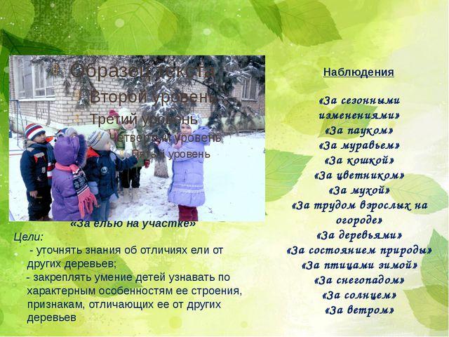 «За елью на участке» Цели: - уточнять знания об отличиях ели от других деревь...