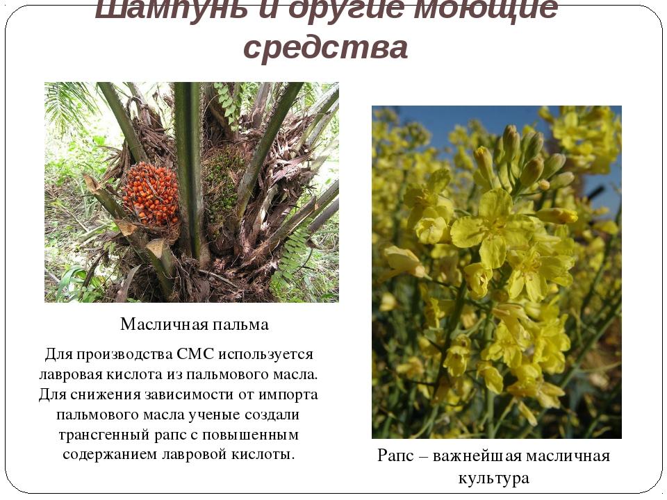 Шампунь и другие моющие средства Рапс – важнейшая масличная культура Маслична...