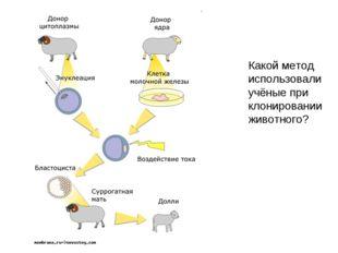Какой метод использовали учёные при клонировании животного?