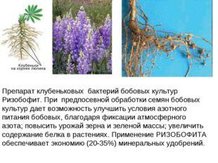 Препарат клубеньковых бактерий бобовых культур Ризобофит. При предпосевной об