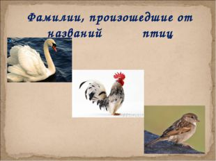 Фамилии, произошедшие от названий птиц