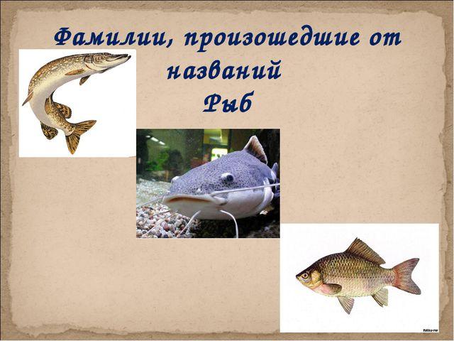 Фамилии, произошедшие от названий Рыб Фамилии, произошедшие от названий Рыб