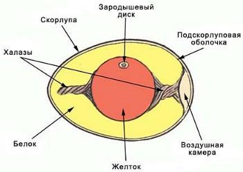 http://my-edu.ru/edu_bio/img/2_05_5.jpg