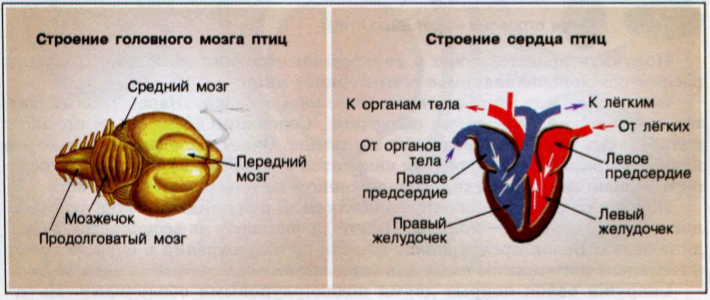 http://www.blgy.ru/images/biology7t/pic81.png